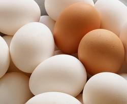 صوره رؤية البيض في المنام