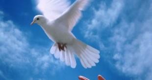 صوره موضوع تعبير عن السلام
