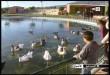 بالصور منتجع الطيور بمدينة فاس hqdefault247 110x75
