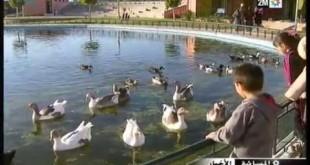 بالصور منتجع الطيور بمدينة فاس hqdefault247 310x165