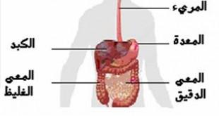 صوره صورة الجهاز الهضمي عند الانسان