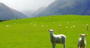 صوره صور مناظر طبيعية من نيوزلندا