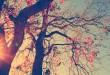 بالصور معنى الاشجار في المنام large 110x75