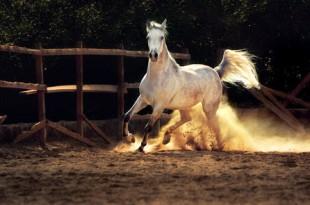 صوره تفسير حلم الحصان البني للمتزوجه لابن سيرين