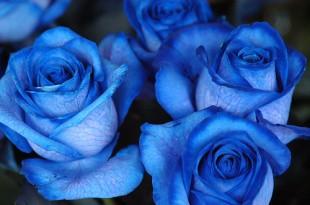 صوره اللون الازرق في الحلم
