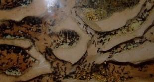 صوره احدث صور لبيت النمل