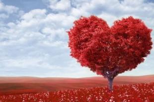 صورة سيكولوجية الحب طارق الحبيب