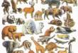 صور كيف يوظف الانسان بعض الحيوانات في حياته