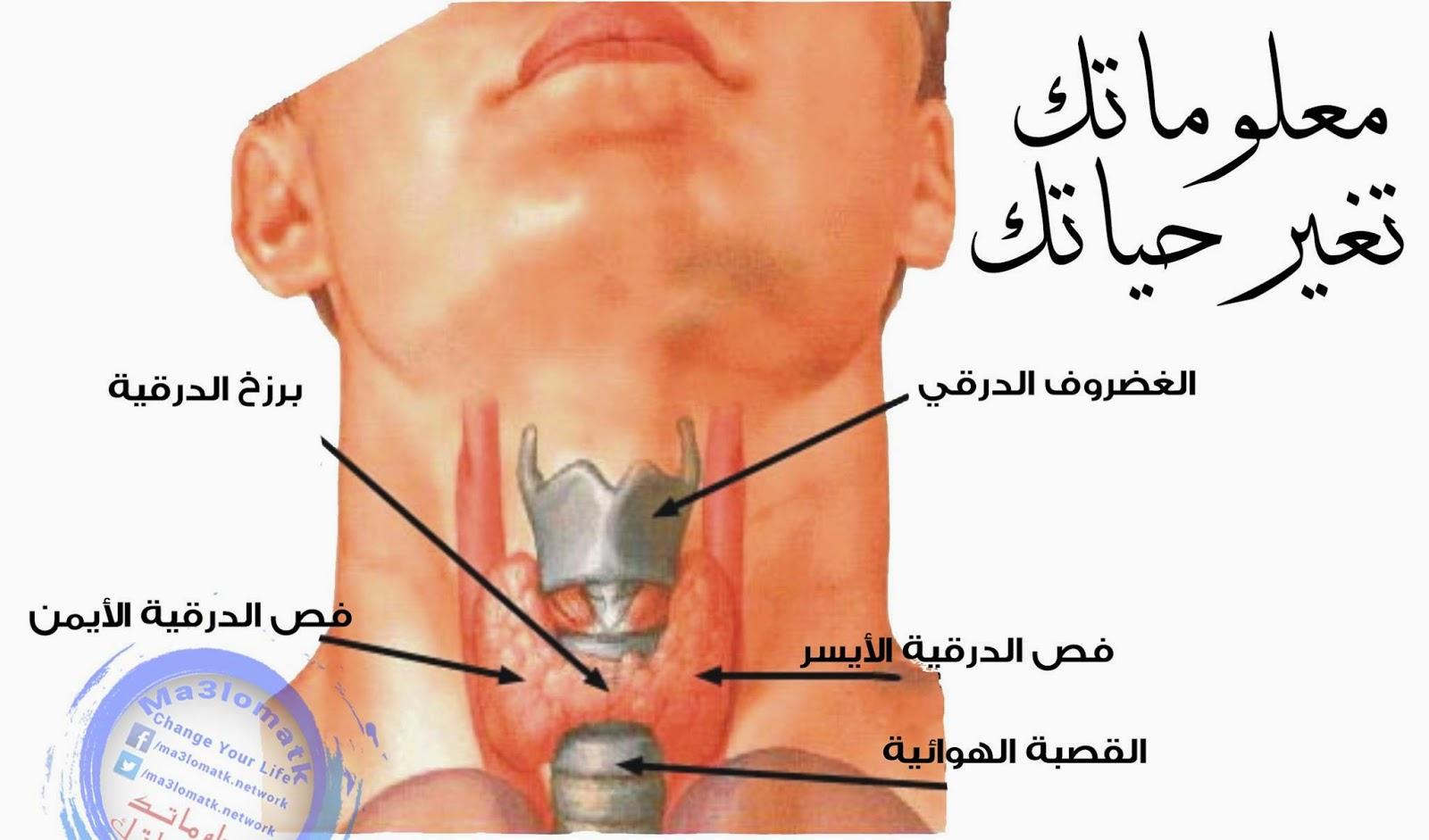 بالصور علاج الغدة الدرقية فعال 11033220 875287632536113 1565371530 o