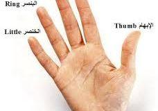 صوره اسماء اصابع اليد بالفرنسية