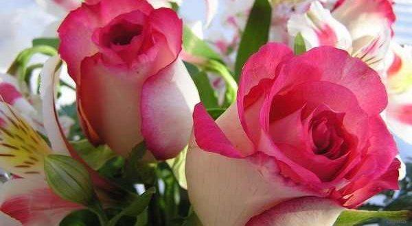 صوره اجمل صور الزهور الحمراء