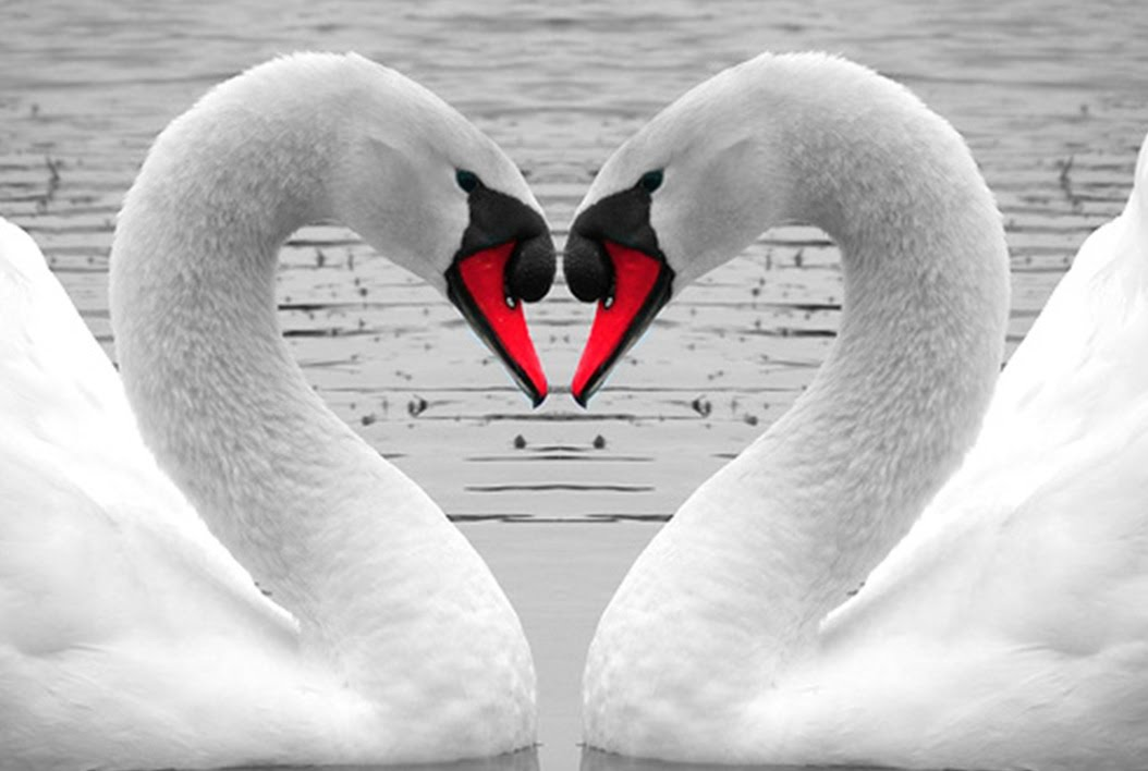 بالصور احلى شعر عن الحب 20160616 1357