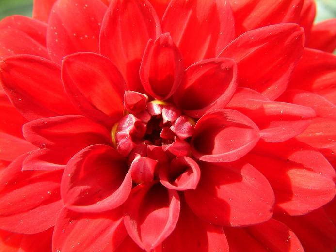 صور صور زهرة ملونه جميلة