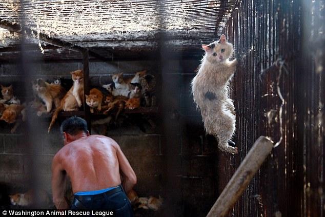 صور تفسير حلم قتل القط او ذبح القطة في المنام