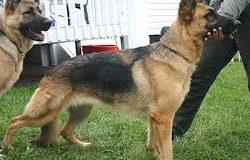 صوره حديث الرسول عن الكلاب