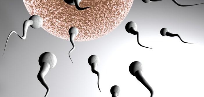 صوره الشهر التاسع من الحمل للبكر وتدخل العاشر