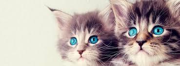 صوره غلاف واغلفة قطط هادئة وجميلة