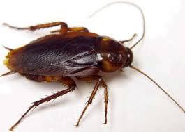 Image result for انواع الحشرات المنزلية بالصور