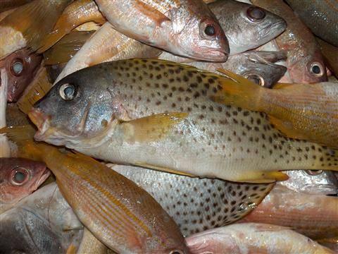 صوره السمك المشوي في المنام