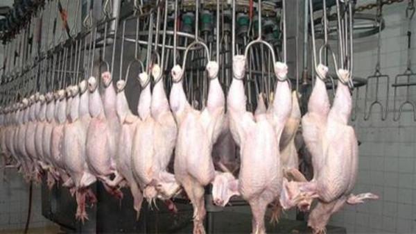 بالصور ذبح الدجاج على الطريقة الاسلامية 20160621 25