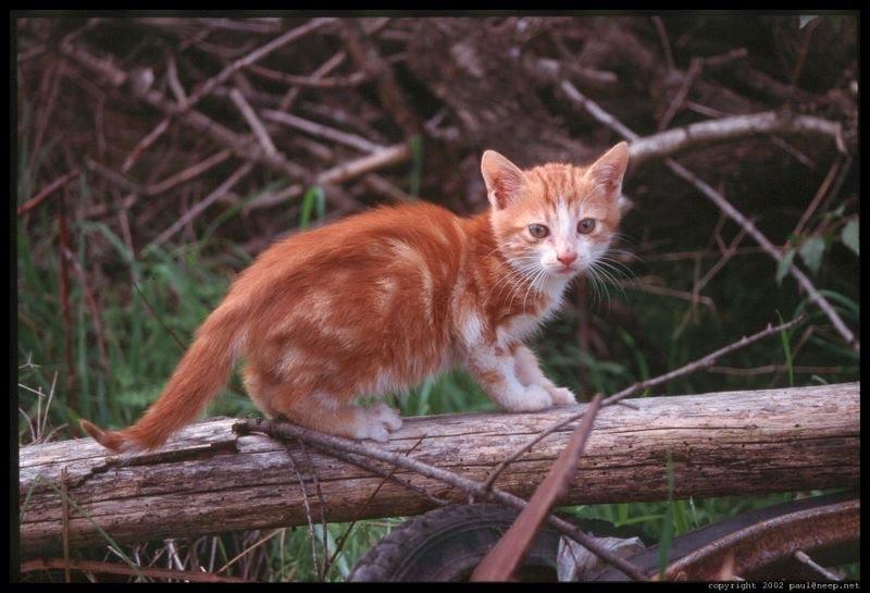 بالصور غلاف واغلفة قطط هادئة وجميلة 20160622 490