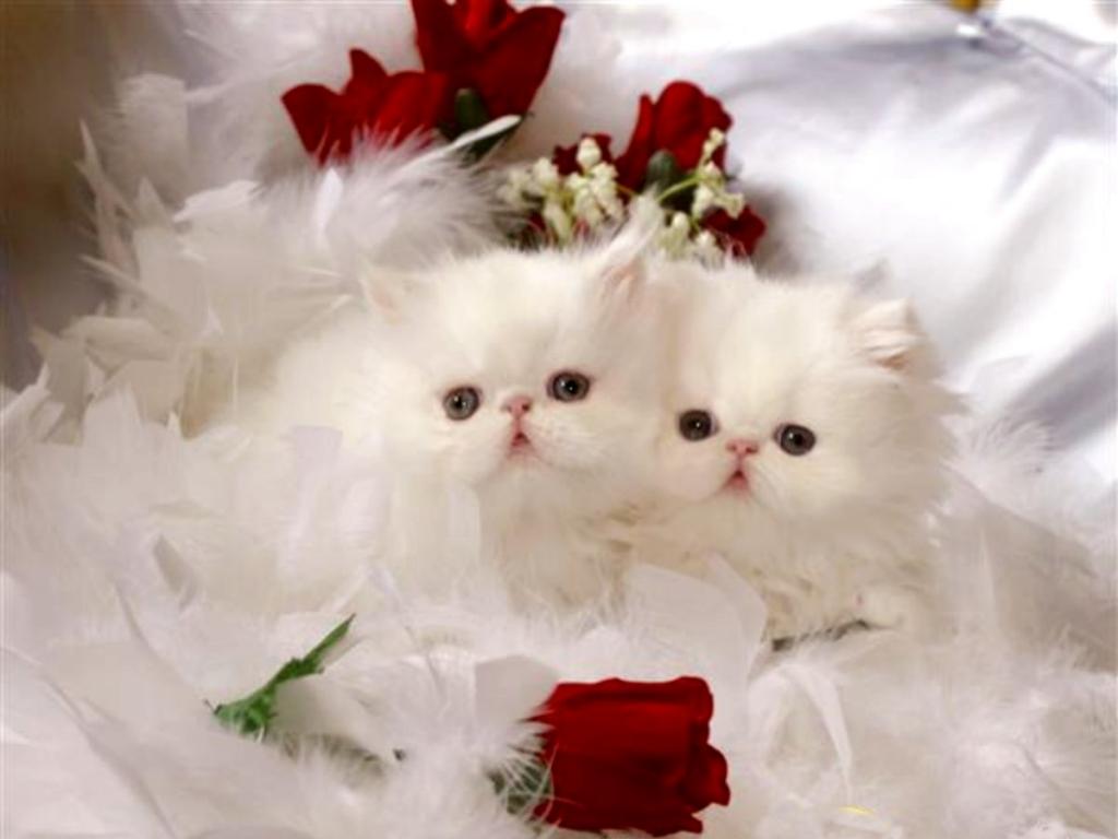 بالصور غلاف واغلفة قطط هادئة وجميلة 20160622 491