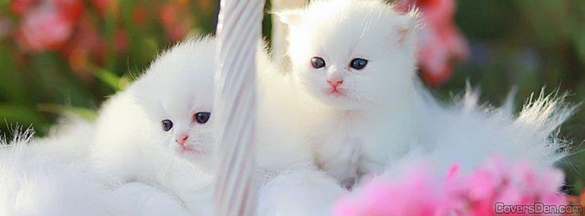 بالصور غلاف واغلفة قطط هادئة وجميلة 20160622 492