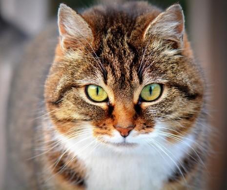 بالصور تفسير رؤية قطة في المنام 20160623 150