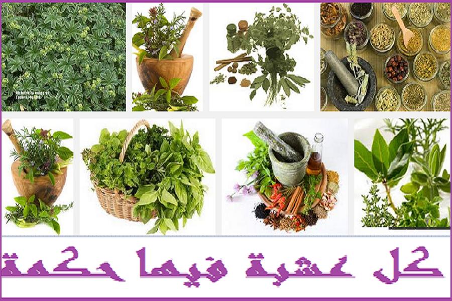 صوره التداوي بالاعشاب الطبيعية لجميع الامراض