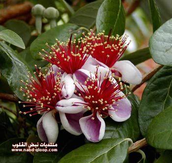 بالصور انواع الزهور ومعلومات عنها 20160624 1062