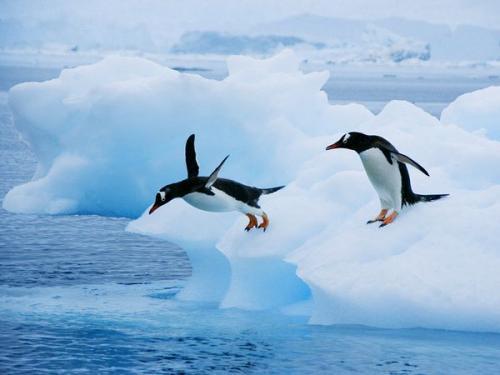 صوره معلومات عن حياة البطريق