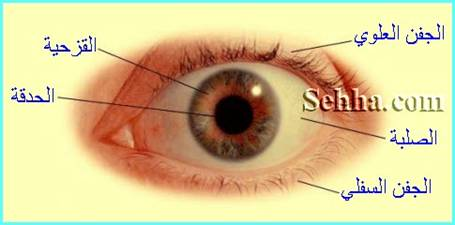 http://www.sehha.com/medical/Anatomy/Eye_Anatomy09.jpg