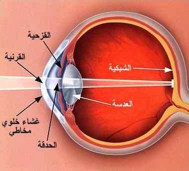 صوره بحث علمي على العين