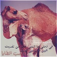 صوره عشق البداوه فيس بوك اجمل صور بدويه روعه وجنان
