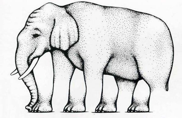 optical Elephant