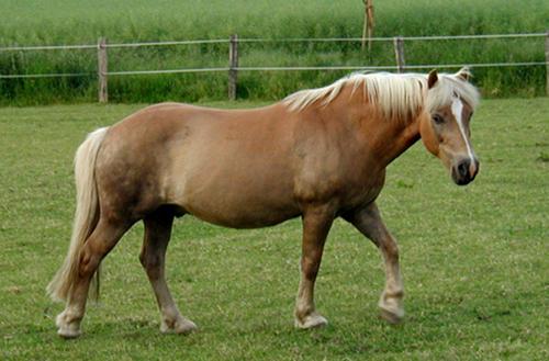 بالصور تعرف علي انواع الخيول 20160625 1035