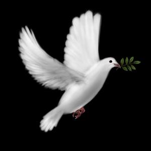 بالصور صور معبرة عن السلام 20160625 1163