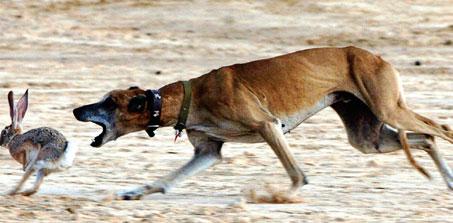 صوره اسرع كلاب في العالم