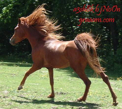 صوره بحث حول الحصان بالصور