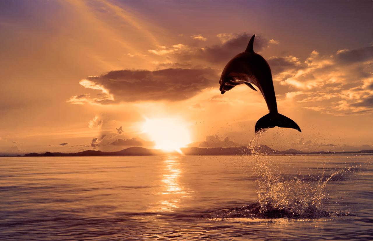 بالصور غروب الشمس بالصور روعه 20160625 470