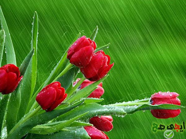 صوره اجمل صور مناظر زهور