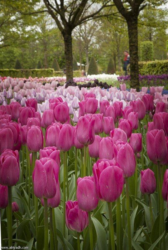 بالصور اجمل صور مناظر زهور 20160625 582