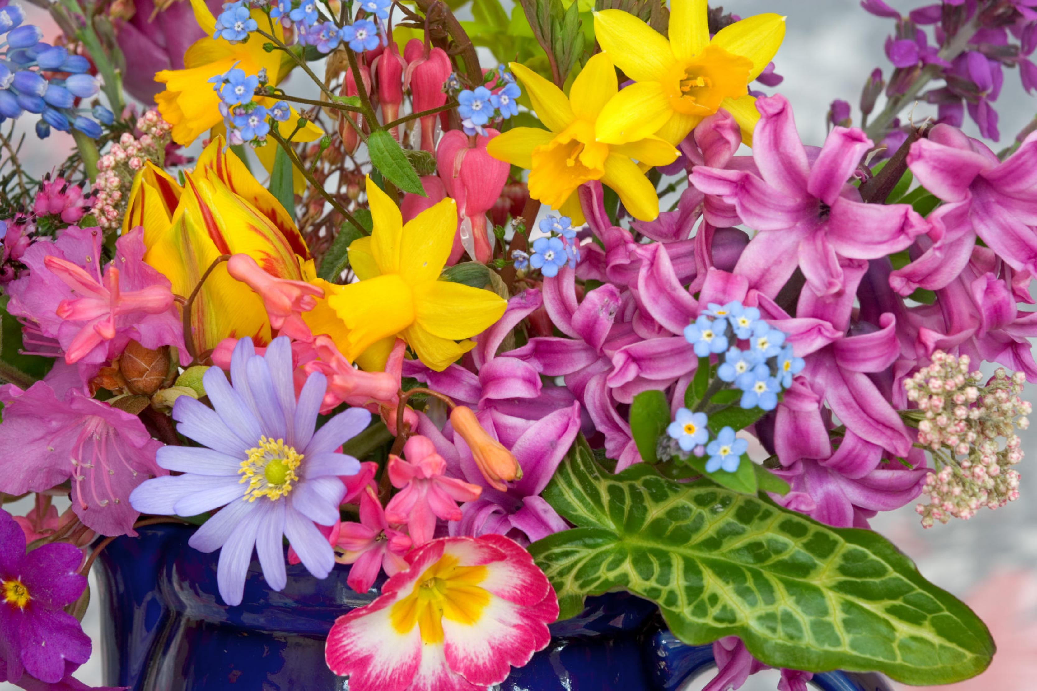 بالصور اجمل صور مناظر زهور 20160625 585