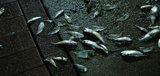 صوره موضوع عن الاسماك عالم البحار والمحيطات