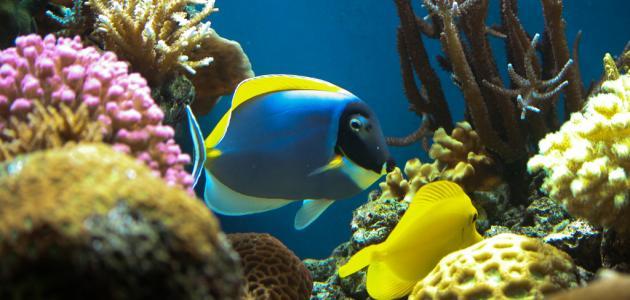 بالصور موضوع عن الاسماك عالم البحار والمحيطات 20160626 1350