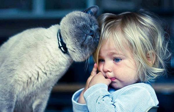بالصور اجمل صور فتيات وقطط