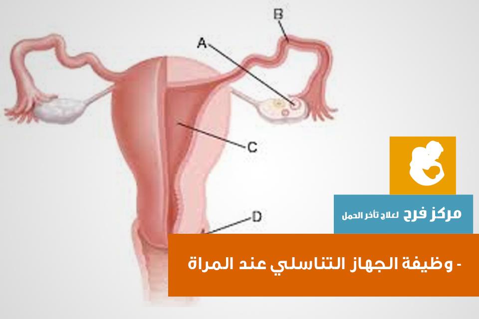 بالصور طبيب نساء وعقم و جهاز تناسل 20160626 168