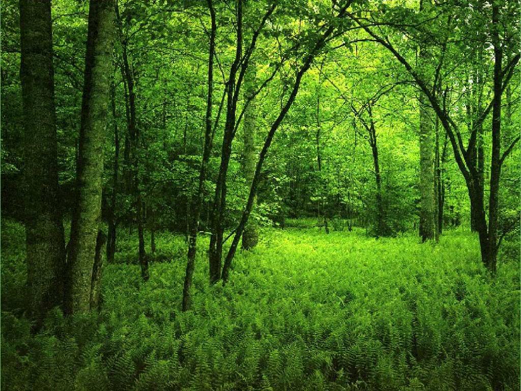 اجمل مناظر طبيعية  فى ألعالم 2018 صور مناظر طبيعية  خضراءَ خَلفيات خلابه جميلة  جداً 2018 للفيس بِوك