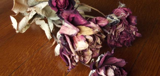 صوره طريقة تجفيف الورد الطبيعي