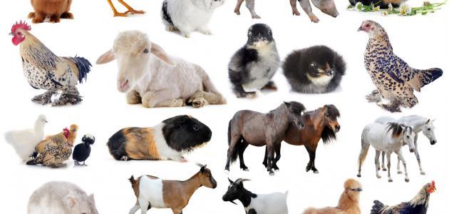 صوره بحث عن اسماء الحيوانات